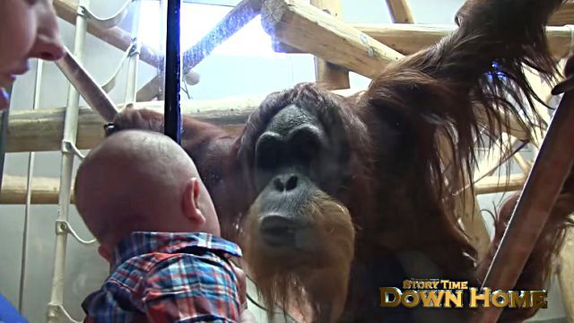 orangutanbaby0