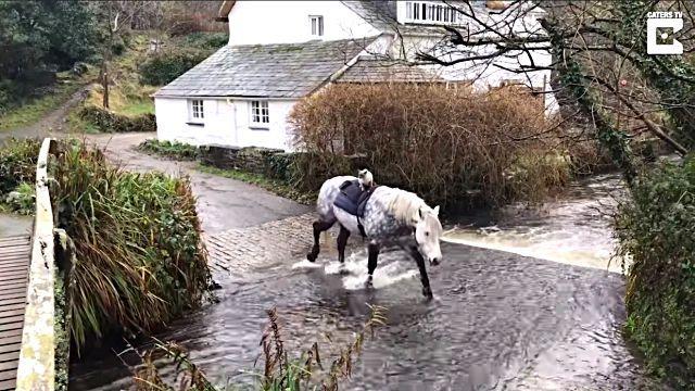horseridingcat6
