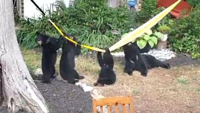 bearkids2