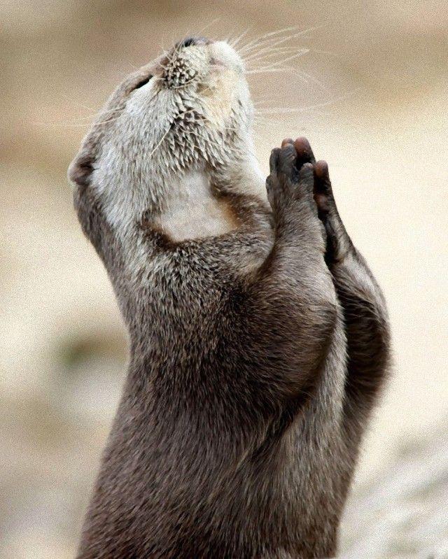 prayer15_e