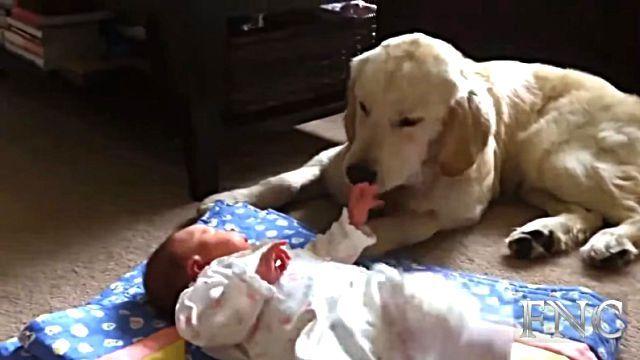 mamadogs0