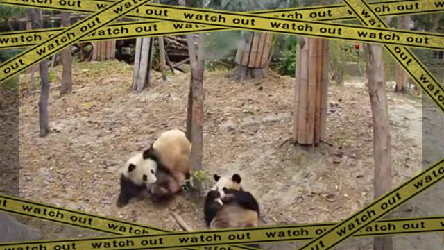 panda1-frame