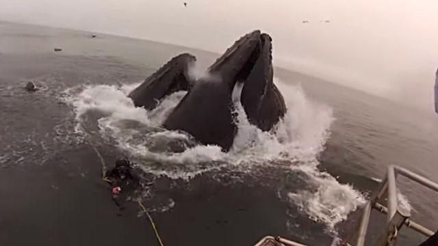 whalesndivers4