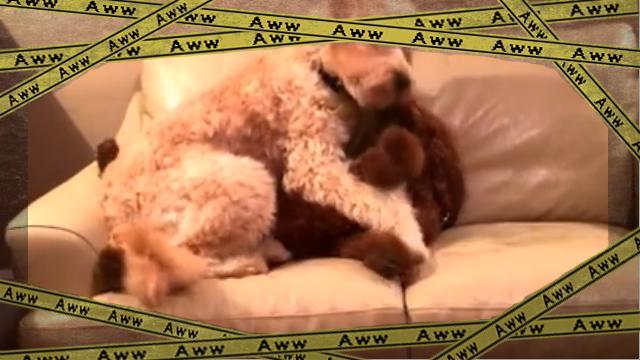 dogsaved [www-frame