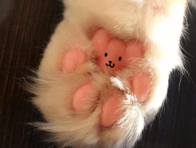 beans-10 [www.imagesplitter.net]