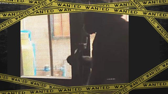 doorcat1-frame