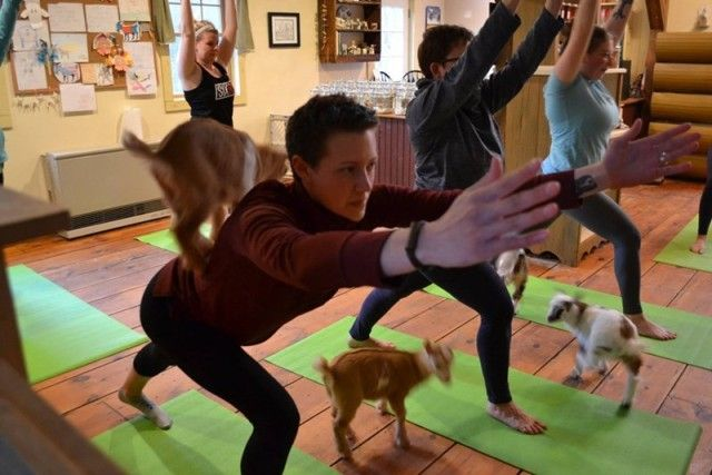 yogawithgoats9_e