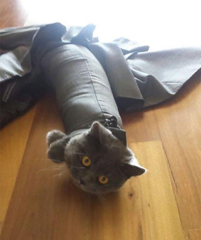 funny-idiot-cats-264-5ae07f159448e__605_e