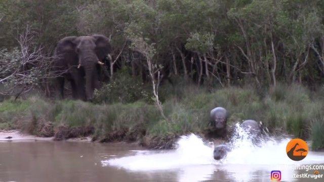 elephantnhippos4_e