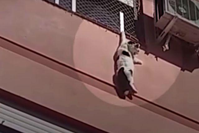 danblingcat0