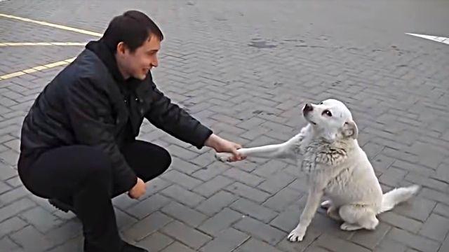 straydog0