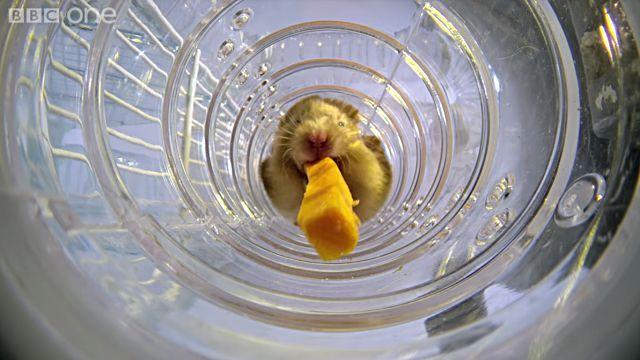 hamsterscheeks5
