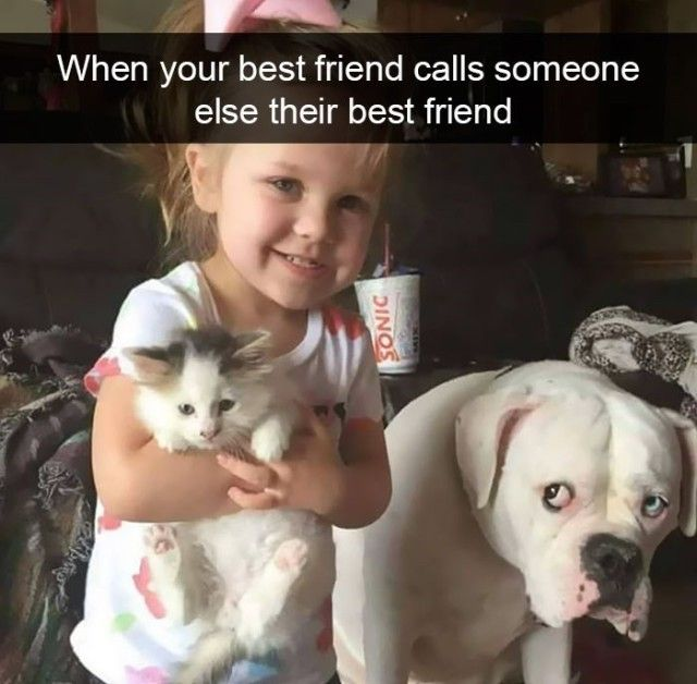 funnyanimals5_e