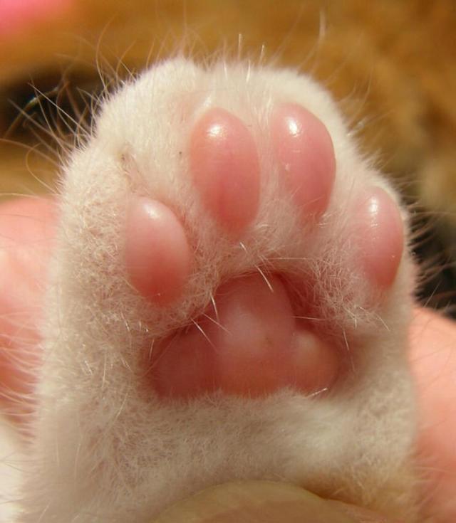 beans-2 [www.imagesplitter.net]