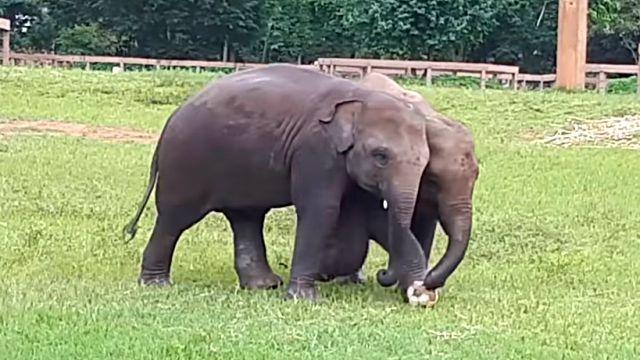 elephantplayingball3