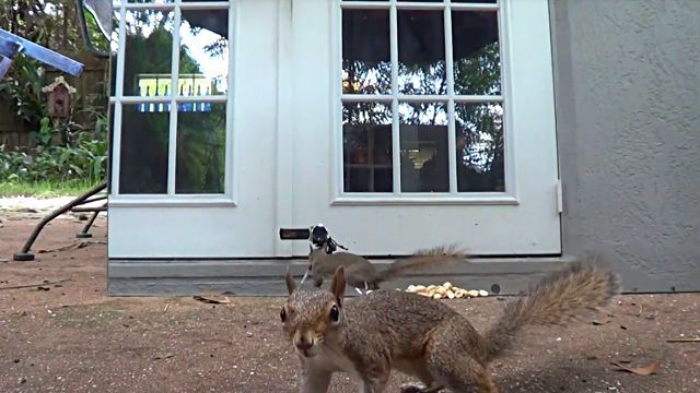 squirrelsvsmirror0