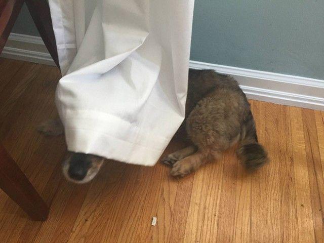 hide-and-seek14_e