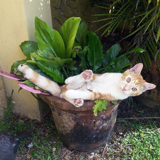 cat-plant5_e