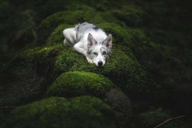 Soulful-Portraits-of-Dogs (3)_e