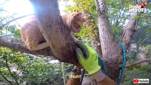 第二の人生は「木から下りられなくなった猫を助けること」に捧げたい!70を過ぎて木に登り続けるクライマー