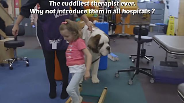 therapydog7