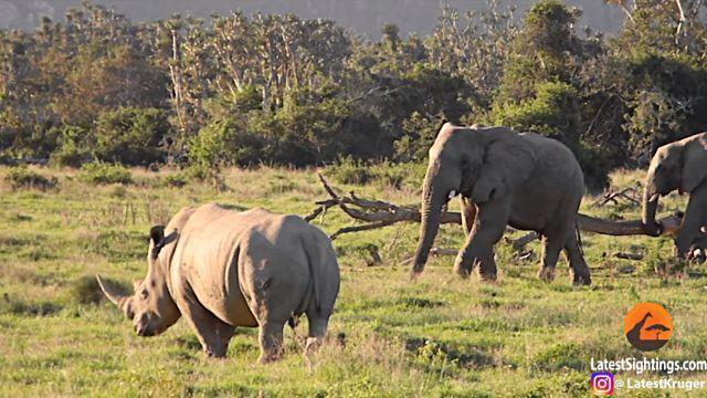 elephantnrhino1