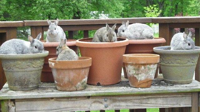 bunniesinpots-59b76397703b9__605_e