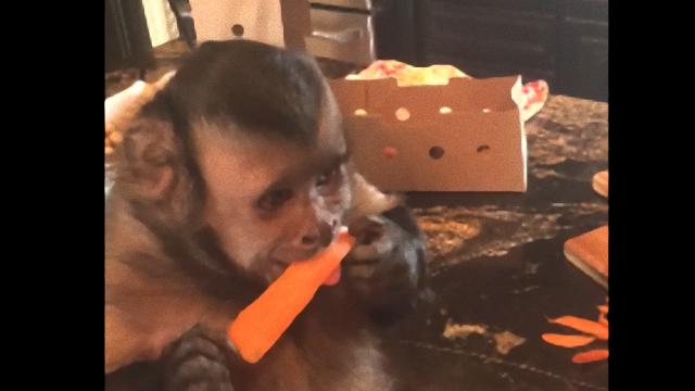 monkey-5_e