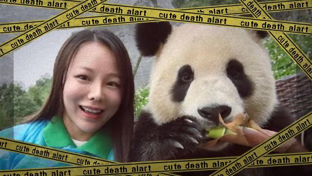 panda-6 [www-frame