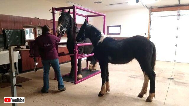 horsedentist3_640