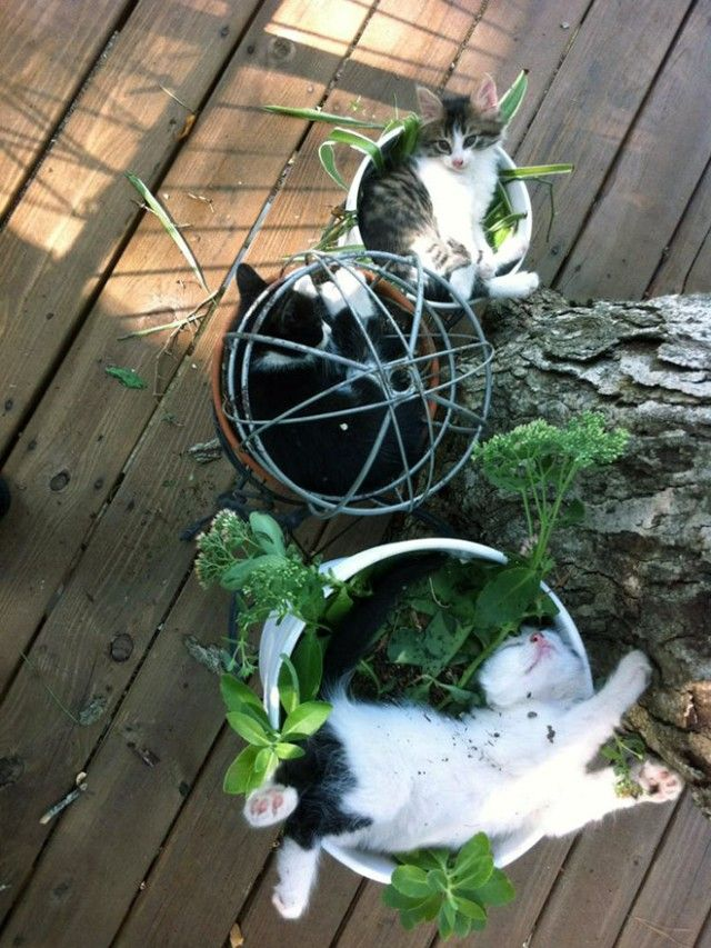 cat-plant6_e