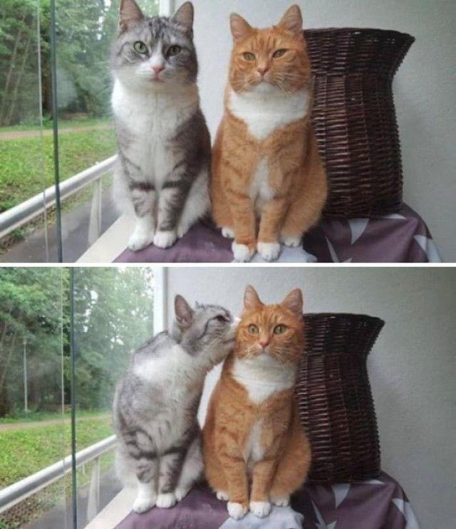funny-cat-pics-posts-6-5c2a2c6fb3125__700_e