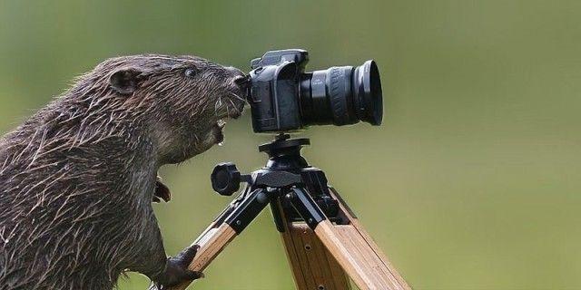 photographers7_e
