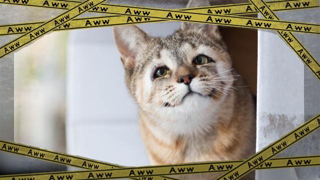 cat-3_e-frame