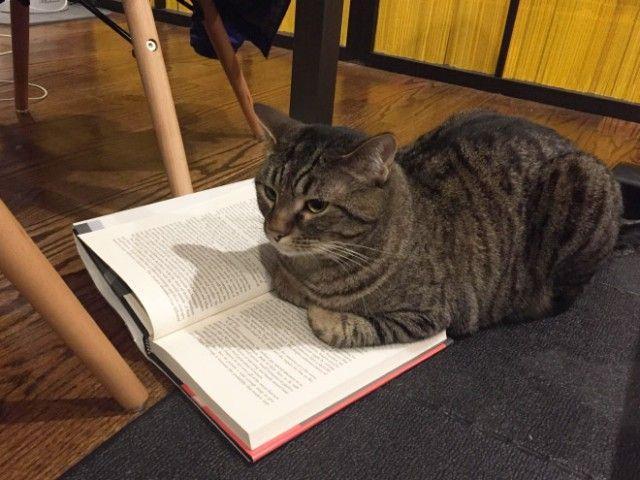 cats-vs-reading17_e