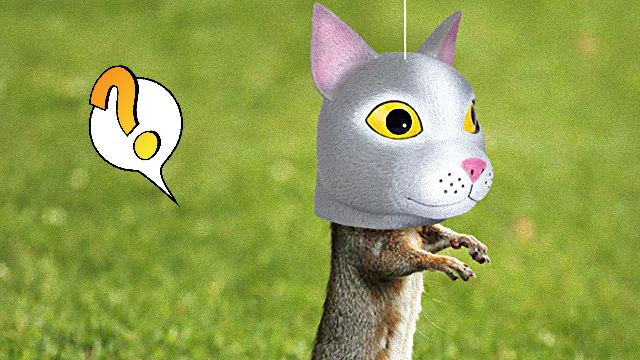 cat-head-squirrel-feeder_ea