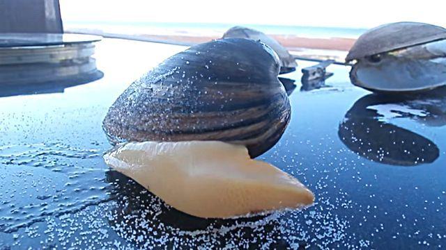 clam3