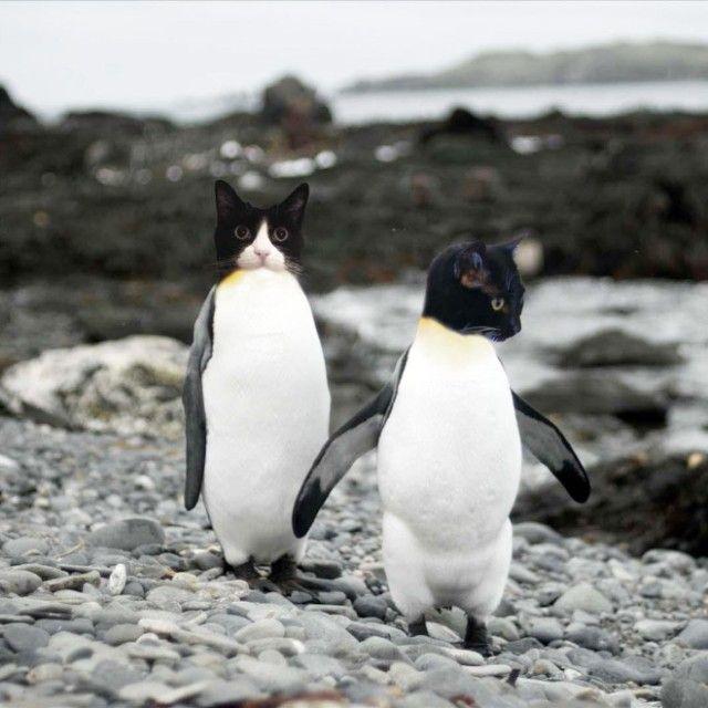 penguin4_e