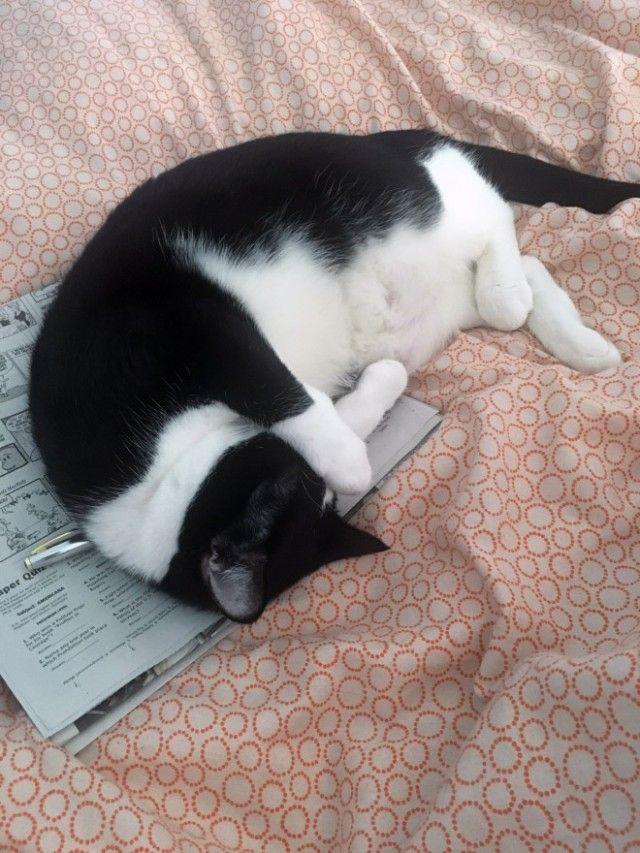 cats-vs-reading14_e