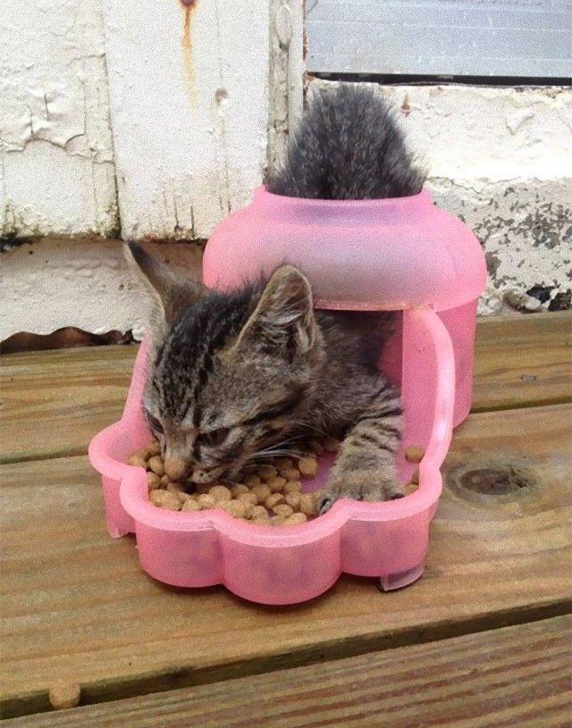 funny-idiot-cats-263-5ae07ee2e20cf__605_e