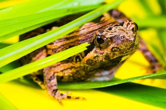 tree-frog-382072_960_720_e