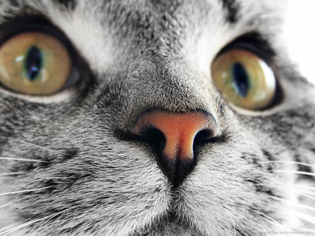 nose-14 [www.imagesplitter.net]