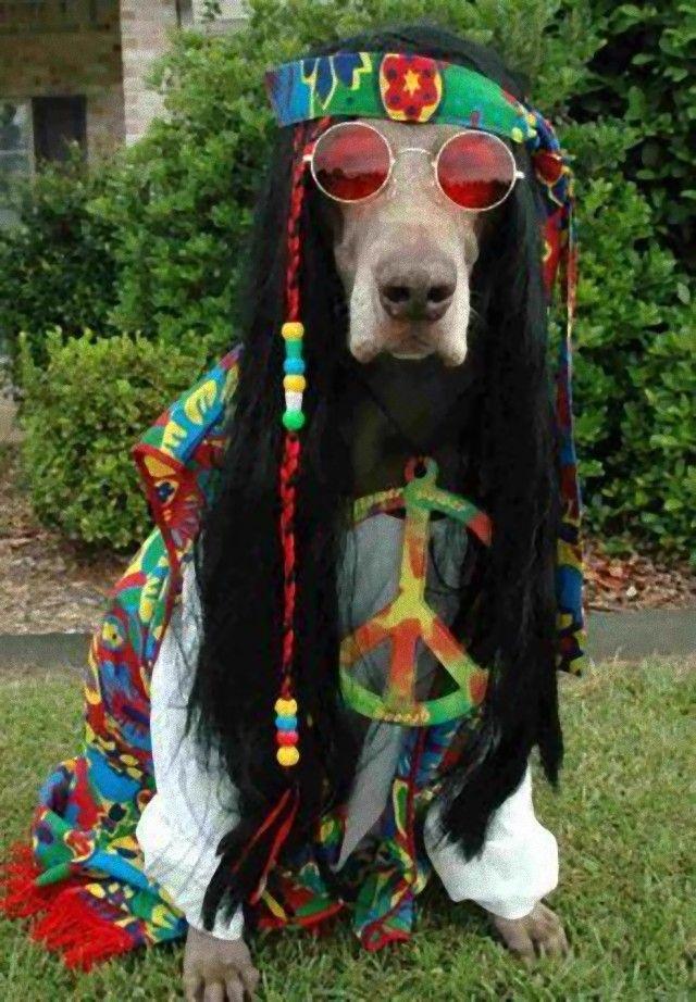 hippie_e