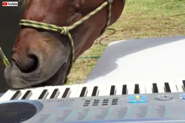 horseplayingpiano0_640