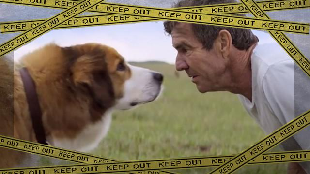 dog-1_e-frame