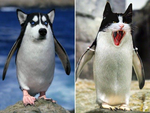 penguin2_e