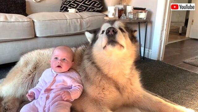 dogswbaby6_640