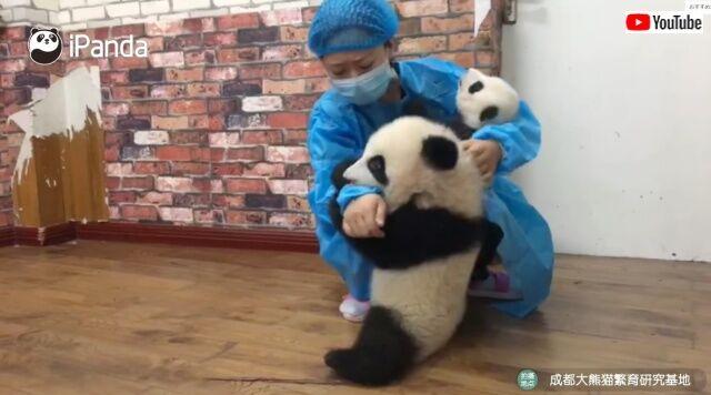 panda5_640