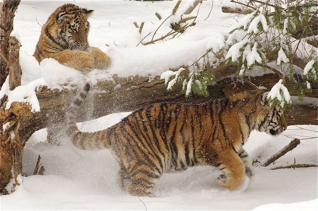 funny-animals-first-snow-cats-dogs32_e
