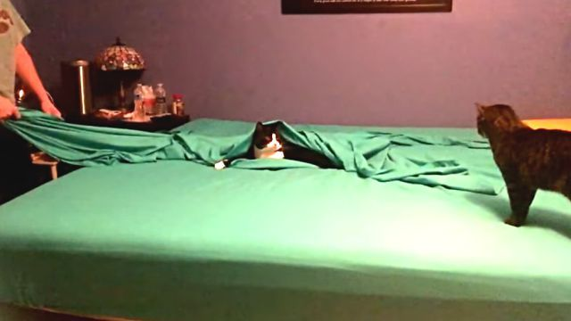 bedmaking5